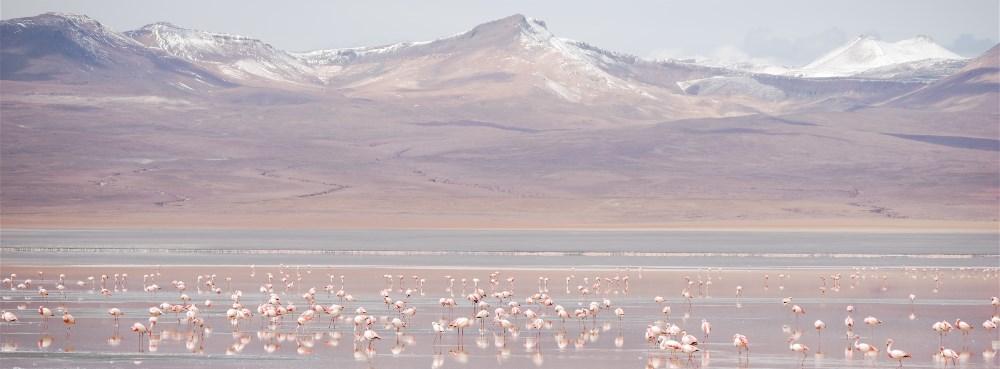 Uli_Flamingos_rosa_web.jpeg