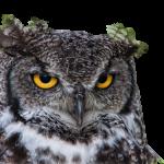 owl-2569202_1920