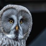 owl-4819550_1280_Tobias_Heine_pixabay
